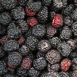 Ripe sweet black and red raspberry textured background