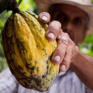 Cc0 from https://pixabay.com/en/cocoa-man-colombia-peasant-hand-452911/