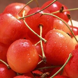 Cherry cherries tart cherry