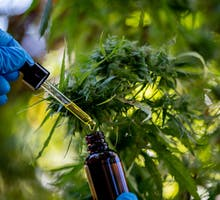 Gloved hand holds medicine dropper and bottle of CBD oil with hemp plants in background