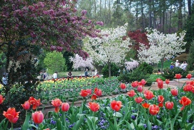 Spring flowers in bloom in a botanical garden