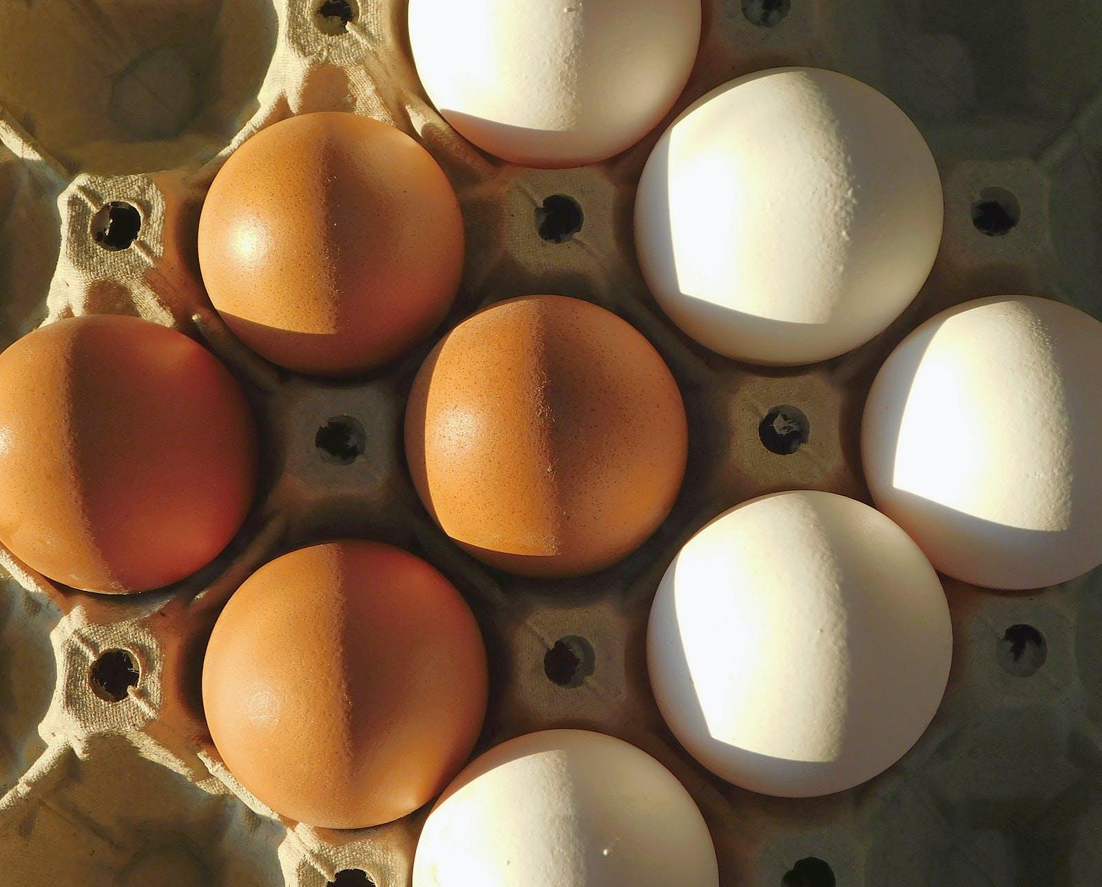 Organic white eggs vs. farm Organic white eggs vs. farm eggs. White Natural Organic Eggs and Chicken Farm Eggs. Natural foods to mass-produced foods.eggs. White Natural Organic Eggs and Chicken Farm Eggs. Natural foods to mass-produced foods.