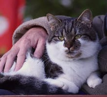 Older person petting a cat